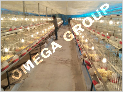Commercial chicks cage system